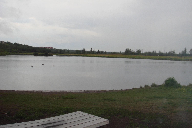 Kennedale Wetland